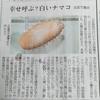 小豆島で白いナマコがとれちゃったって話。