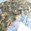 明治神宮のヤマガラ