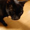 ウチの老猫とガナドールの話