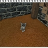 Arche Age ロバと猫を育成する!