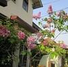四月の花と突如!住宅街を貫く16m道路計画
