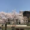 桜の季節が好き