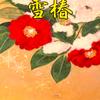 斉藤一人さん 雪椿