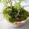 ミニ盆栽に巣を作ったアリを退治!