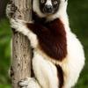 【妄想旅の計画⑦】固有種の宝庫マダガスカルを旅する