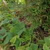熱帯雨林式家庭菜園