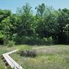 ◆'19/06/01     桑ノ木台湿原へ⑤…帰り道