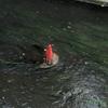 #4 川の中のカk繝ゥ繝シーン