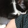 猫もダルダル