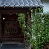 京都・黒谷 - 金戒光明寺塔頭 西雲院の木槿