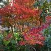 紅葉を愛でる日々