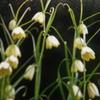 3月22日誕生日の花と花言葉