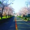 【日記】2018年3月27日(火)「桜並木」