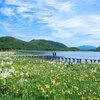 福島・雄国沼と雄国山 コバイケイソウとニッコウキスゲの咲く湿原