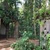 2016 スリランカ ジェフリー・バワの作品を巡る旅 〜4/28 ルヌガンガ見学①