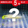 ハゼ MIX 5匹セット!海水魚 生体 ハゼ 15時までのご注文で当日発送【ハゼ】