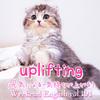 【週末英語#191】「uplifting」は「元気になる・気持ちが上がる◯◯」という意味で使える
