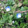 春到来!( * ›ω‹ )