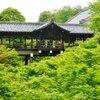 京都 青モミジの東福寺塔頭寺院の光明院(こうみょういん)