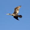 鳥の持つすごい能力 くちばしが脳を進化 人の指先より鋭敏な感覚