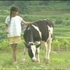 労働映画『夢は牛のお医者さん』が終了