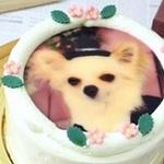 柏市周辺で見つけたプリントケーキが買えるケーキ屋さん4選