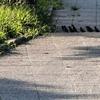 スズメの行列