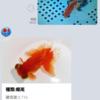 「Kingyo AI Navi」のアプリ化を考える (2)