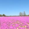芝桜:花夢の里 - Flower  village-  ②(広島県世羅町)