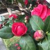 【ラン日記】日本は桜!