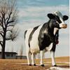 牛乳の基本知識とおいしさを活かすポイント