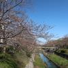山崎川四季の道 2020.3.25
