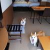レジーナリゾートびわ湖長浜(2) お部屋編(犬との宿泊 感想ブログ)