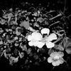 心の闇の『ヒンデミットの主題による変奏曲』自作自演盤