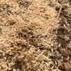 にんじんの種が発芽しない。原因は不明。とりあえず追い蒔きしよう!