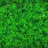 なぜ、植物の緑は美しいのか。私的考察