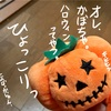 かぼちゃ、今年最後の仕事する