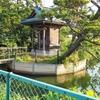 八幡神社の池(千葉県白井)