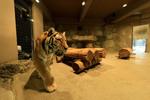 シグマの超広角レンズ 14mm F1.8 DG HSMで円山動物園を撮ってみた!