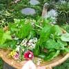 夏野菜収穫中!グリーングリーンな庭