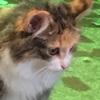 18歳のお婆ちゃんネコ