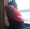 今日の黒猫モモ&白黒猫ナナの動画ー555