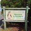 ボルダーズビーチでケープペンギンと対面①