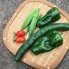 夏の贈り物。夏野菜の収穫。