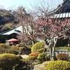 鎌倉 梅 散策