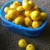 柑橘の香り