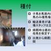 育成馬ブログ 生産編④(その2)
