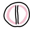 蒲鉾と八幡浜-谷本蒲鉾店と丸栄かまぼこ店-