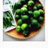 自家製『柚子こしょう』はいったいナニに使うか
