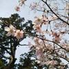 春のお彼岸🎵波動を上げる✨